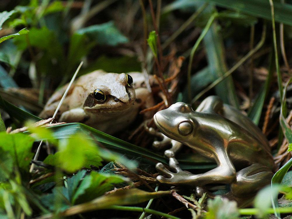 Grenouille en bronze et grenouille rousse réunies dans l'herbe. Objet d'art, Atelier Constance du Bellay.