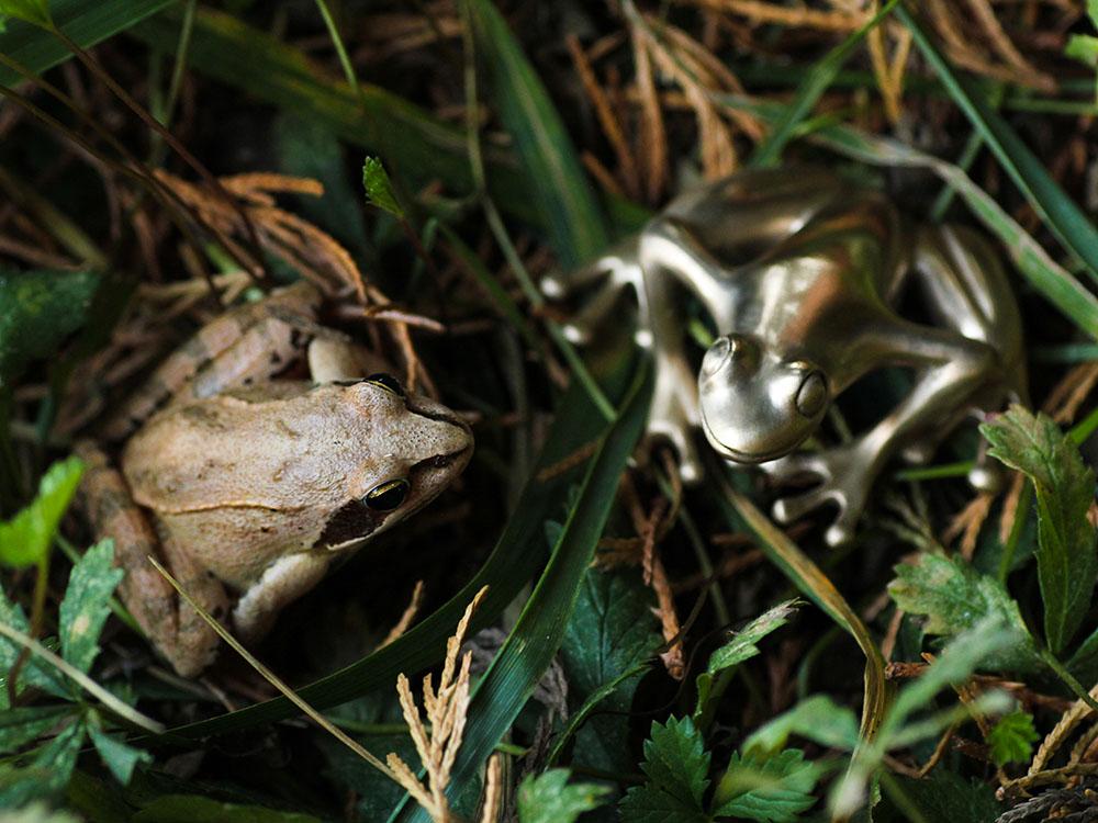 Merveilles de la nature : une grenouille rousse et une grenouille en bronze réunies. Atelier Constance du Bellay.