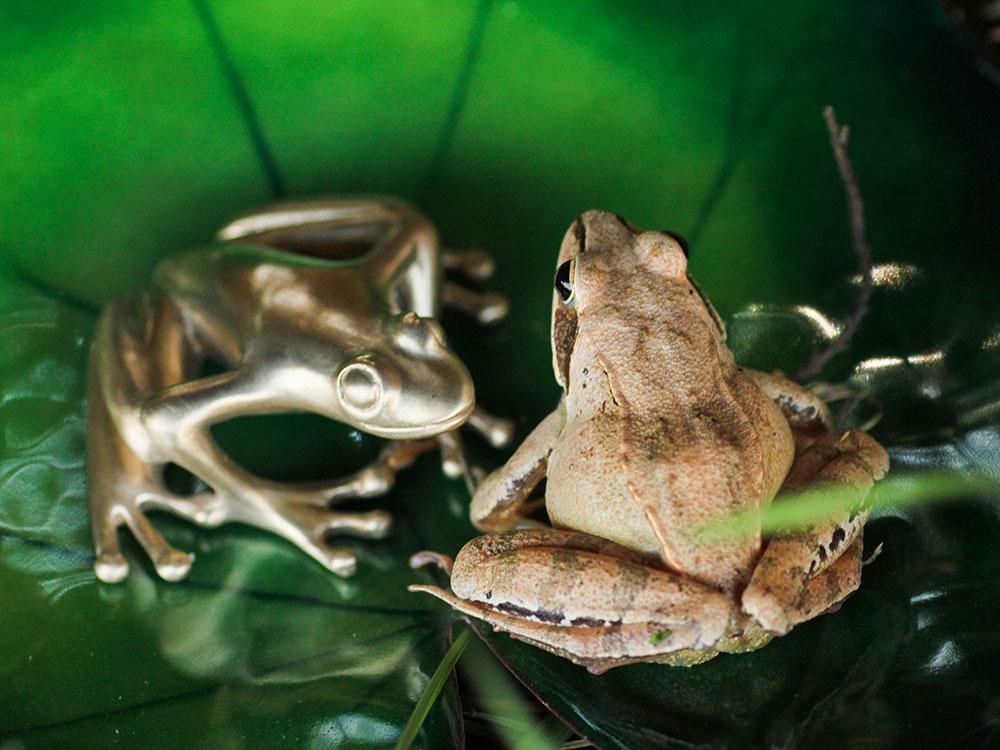 Discussion entre une grenouille rousse et une grenouille en bronze sur un nénuphar en émail grand feu. Atelier Constance du Bellay.