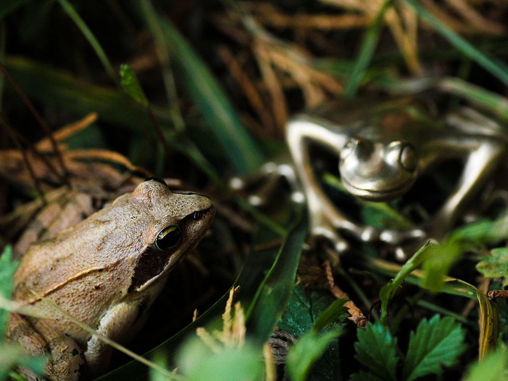 Grenouille rousse et grenouille en bronze en pleine conversation. Atelier Constance du Bellay, bijoux et émaux grand feu.